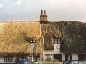 Half Completed New Thatch