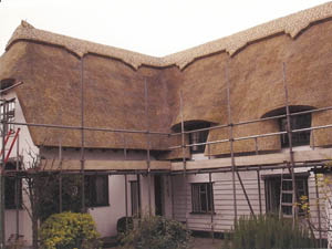 Wheat Reed Thatch