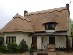 Long Straw Thatch